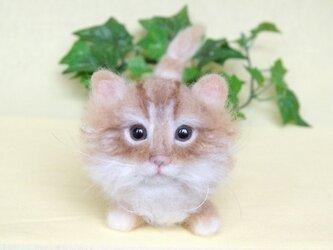 マンチカン風 モコモコ短足 子猫ちゃんの画像