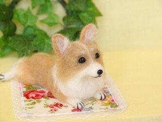 ★【ウェルシュコーギー 伏せポーズ 犬】の画像