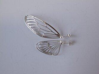 dlicate air P(cicada)の画像