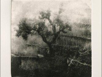 朝霧の画像