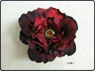 ベロアの深赤花の画像