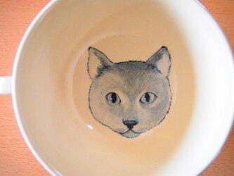 soupcup*ロシアンブルーの画像