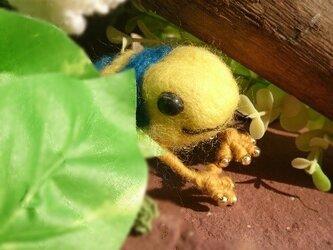 キオビヤドクガエルのブローチの画像