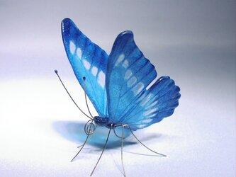《再販》ガラスの蝶 モルフォの画像