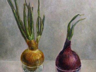 玉葱の画像