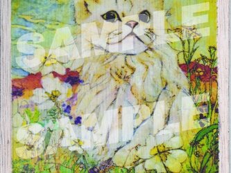木のポストカード『カベサ・プリエタ』の画像