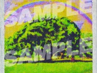 木のポストカード『モンキーポッド』の画像