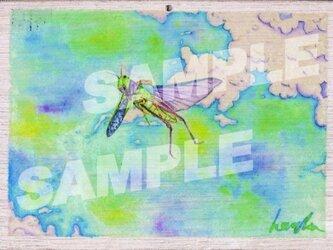 木のポストカード『とのさまバッタ』の画像