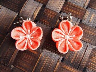 つまみ細工☆春爛漫☆ピンク色の梅のピアスの画像