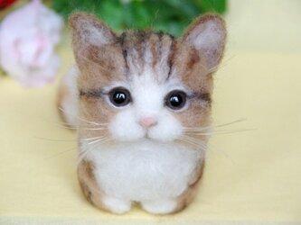 【香箱座り】 まったり猫ちゃんの画像