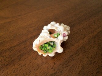 貝がら ミニチュア 春Greenの画像