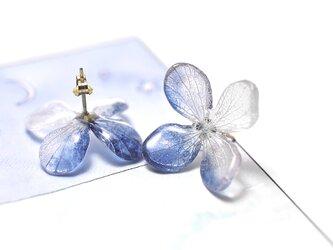 アジサイ【L/藍染】4枚花弁のピアス 14kgf /イヤリングの画像