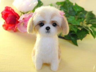 ★【ピンクリボンのシーズーちゃん 犬】お座りポーズ  の画像