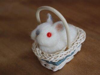 カゴ入り羊毛うさbaby♡ネザーちゃんの画像