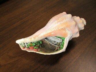 [ひよこぺんぎん様ご依頼品]貝がら ミニチュア 庭園の画像