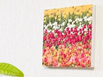 ファブボ「チューリップ畑102」の画像