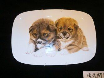 子犬の絵皿の画像