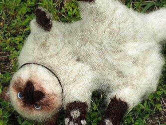 ヒマラヤンの子猫♪コロンちゃん♪【ペットぬいぐるみオーダー】の画像