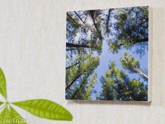 ファブボ「森林浴」の画像