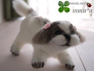 シーズ【犬】貴方のペットのオリジナルぬいぐるみを作りますの画像