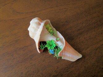 [ivy様ご依頼品]貝がら ミニチュア Green(2)の画像