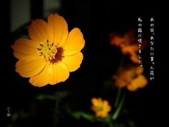 言葉*『あの日あなたに貰った花が私の庭に咲きました』2枚組みの画像