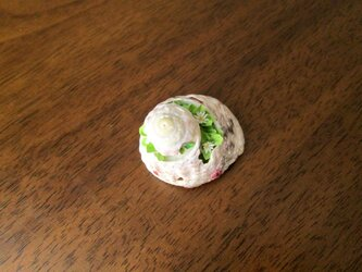 [さい様ご依頼品]貝がら ミニチュア 春Green2の画像