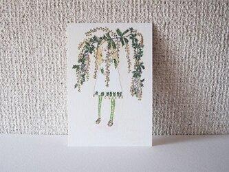 ミモザ と チューリップの画像