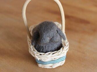 カゴ入り羊毛うさbaby♡ロップちゃんの画像