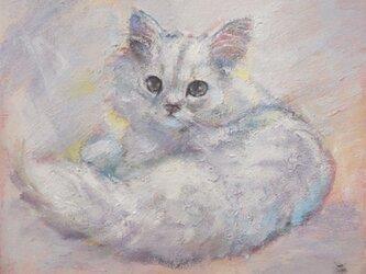 チンチラの子猫の画像