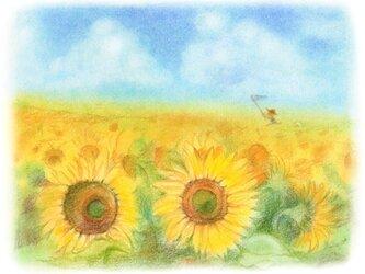 夏休みのひまわり畑の画像