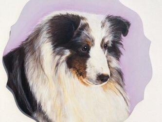 シェルティの肖像画の画像