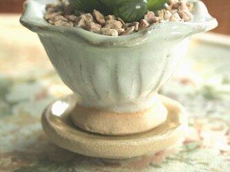 ミニデザートカップの植木鉢の画像