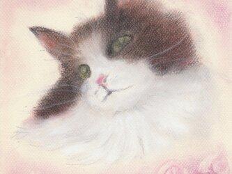 Chat et roseの画像