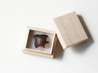 イロイロチドリ【 黒柿 】の画像