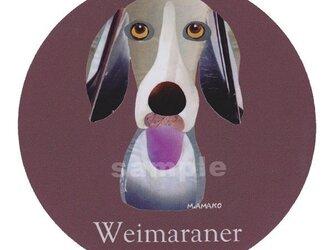 ワイマラナー《犬種名ステッカー/大型犬》の画像