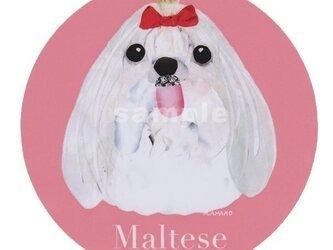 マルチーズ/ロングヘアー《犬種名ステッカー/小型犬》の画像