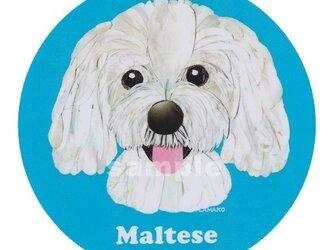 マルチーズ/サマーカット《犬種名ステッカー/小型犬》の画像