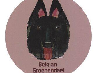 ベルジアン グローネンダール《犬種名ステッカー/大型犬》の画像
