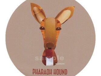 ファラオ ハウンド《犬種名ステッカー/大型犬》の画像