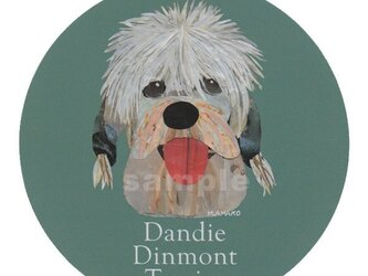 ダンディ ディンモント テリア《犬種名ステッカー/小型犬》の画像
