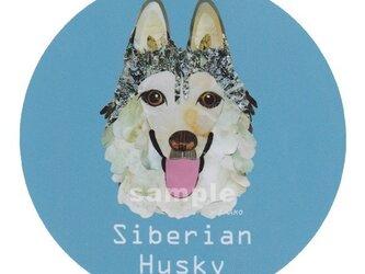シベリアン ハスキー/シルバー2《犬種名ステッカー/中型犬》の画像