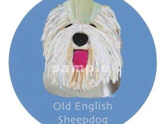 オールドイングリッシュシープドッグ《犬種名ステッカー/大型犬》の画像