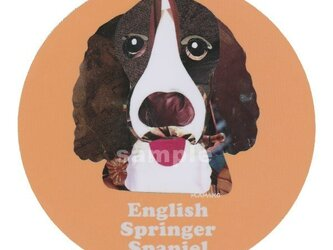 イングリッシュスプリンガースパニエル《犬種名ステッカー/中型犬》の画像