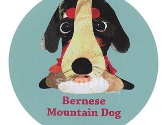 バーニーズ マウンテン ドッグ《犬種名ステッカー/大型犬》の画像