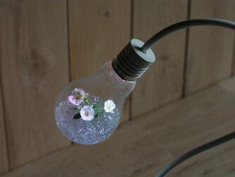 bulb terrarium colorの画像