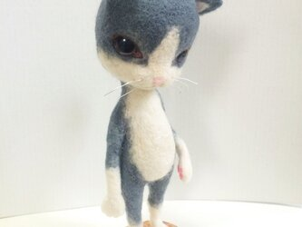ハチワレ猫の画像