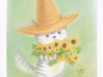 麦藁帽子をかぶった猫 ひまわりの画像