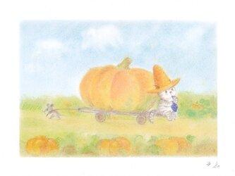 麦藁帽子をかぶった猫 かぼちゃの画像