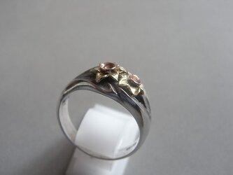 ラッパ水仙の指輪の画像